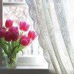 Drapery and tulips on window sill
